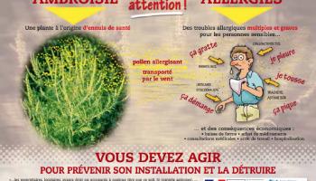 Ambroisie - Vous devez agir pour prévenir son installation et la détruire